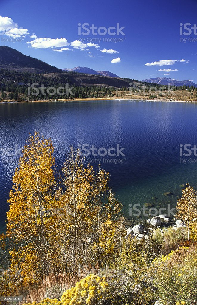 Colorful aspen trees at June Lake in Eastern California stock photo