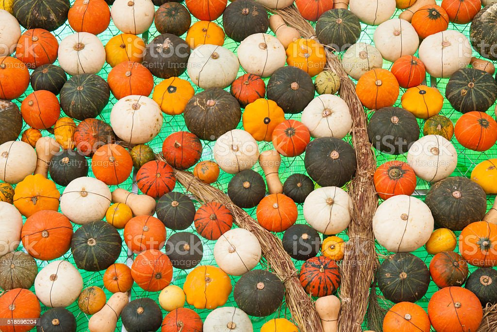Colorful assorted pumpkins royalty-free stock photo