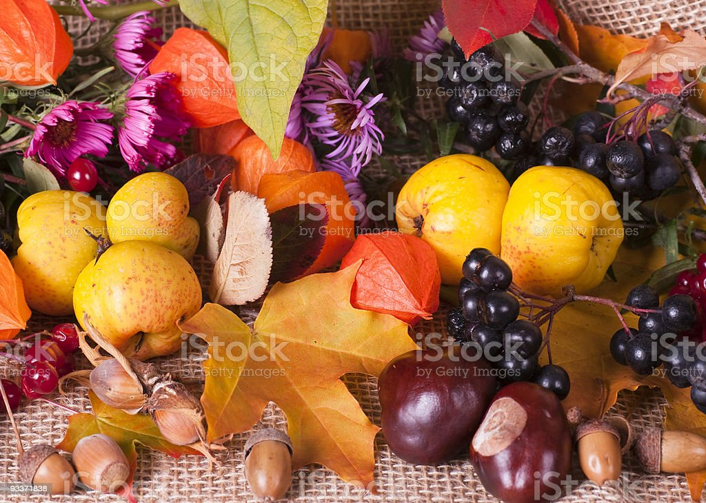 Colorful autumn arrangement stock photo