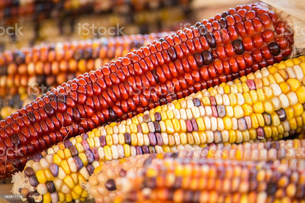 Colorful Autumn Corn stock photo
