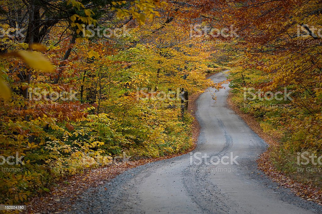 Colorful autumn fall road lined with leaves and trees royalty-free stock photo