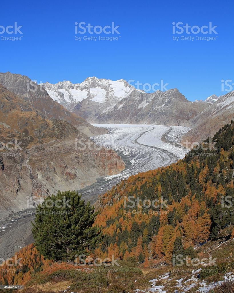 Colorful autumn forest and Aletsch Glacier stock photo