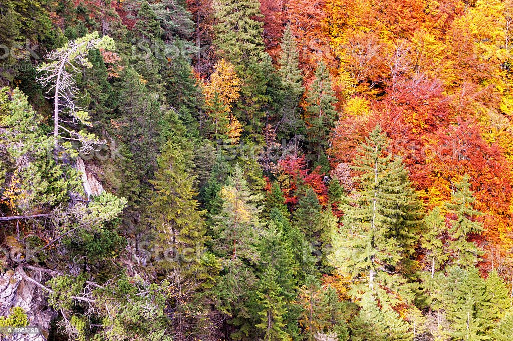 Colorful autumn forest on a mountainside stock photo