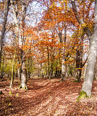 colorful autumn forest with fallen leaves and clear sky