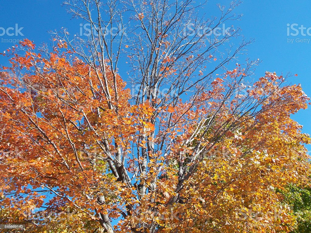 Colorful Autumn Leaves Against Blue Sky stock photo