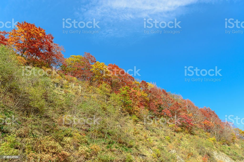 Colorful autumn leaves and the blue sky stock photo