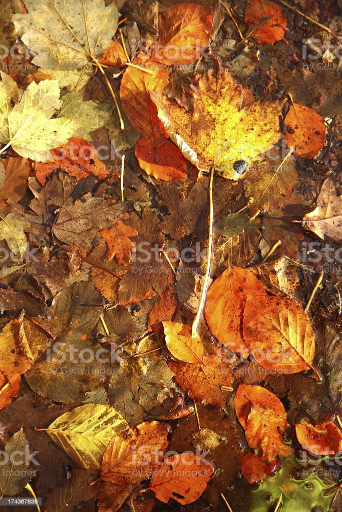 Colorful autumn leaves as background royalty-free stock photo