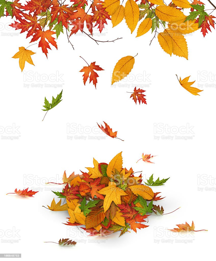 Colorful Autumn Leaves Falling From The Trees royalty-free stock photo