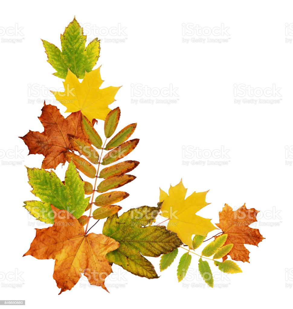 Colorful autumn leaves in a corner arrangement stock photo