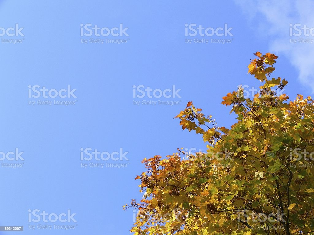 Colorful autumn leaves on sky background royalty-free stock photo