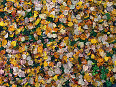 Colorful autumn leaves on the ground in park.