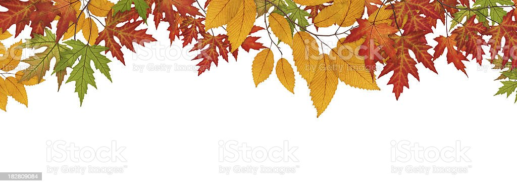Colorful Autumn Leaves On White Background royalty-free stock photo