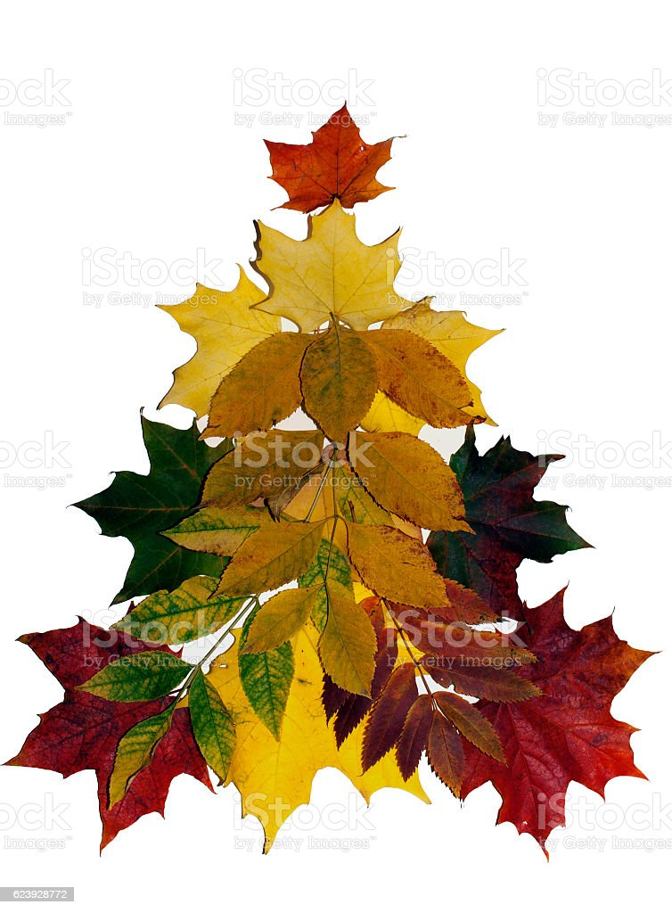 Colorful autumn leaves on white background. stock photo