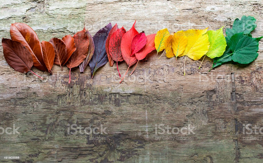 Colorful Autumn Leaves on Wooden Background stock photo