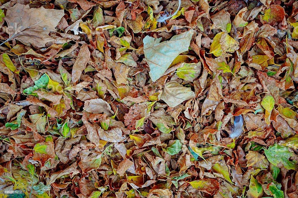 Folhas de outono colorido foto royalty-free