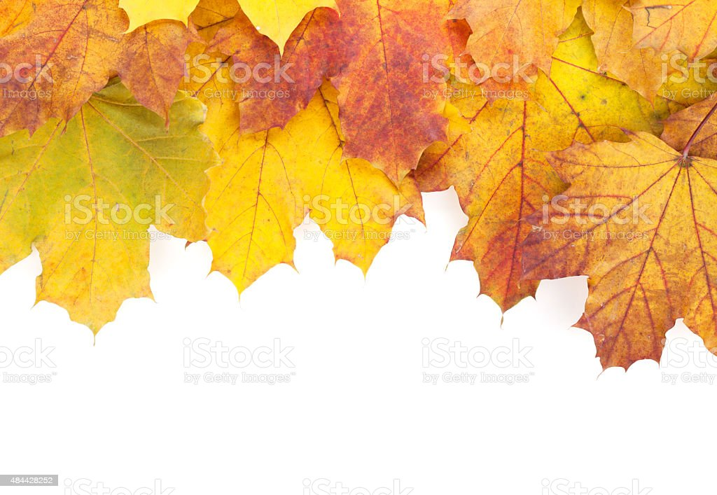Colorful autumn maple leaves frame stock photo