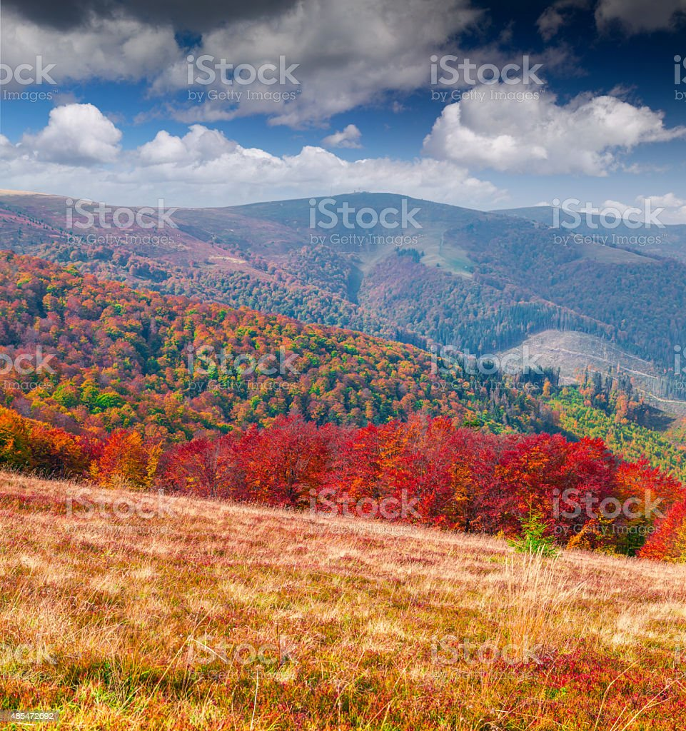 Colorful autumn morning in the Carpathian mountains. stock photo