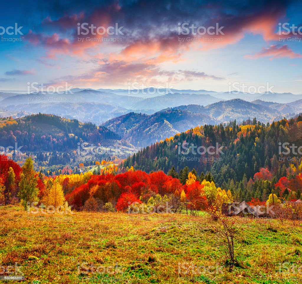 Colorful autumn morning in the Carpathians. stock photo