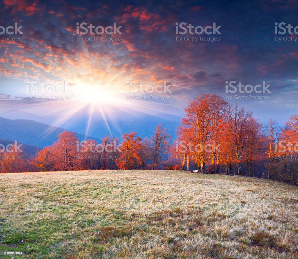 Colorful autumn morning in the mountains. stock photo