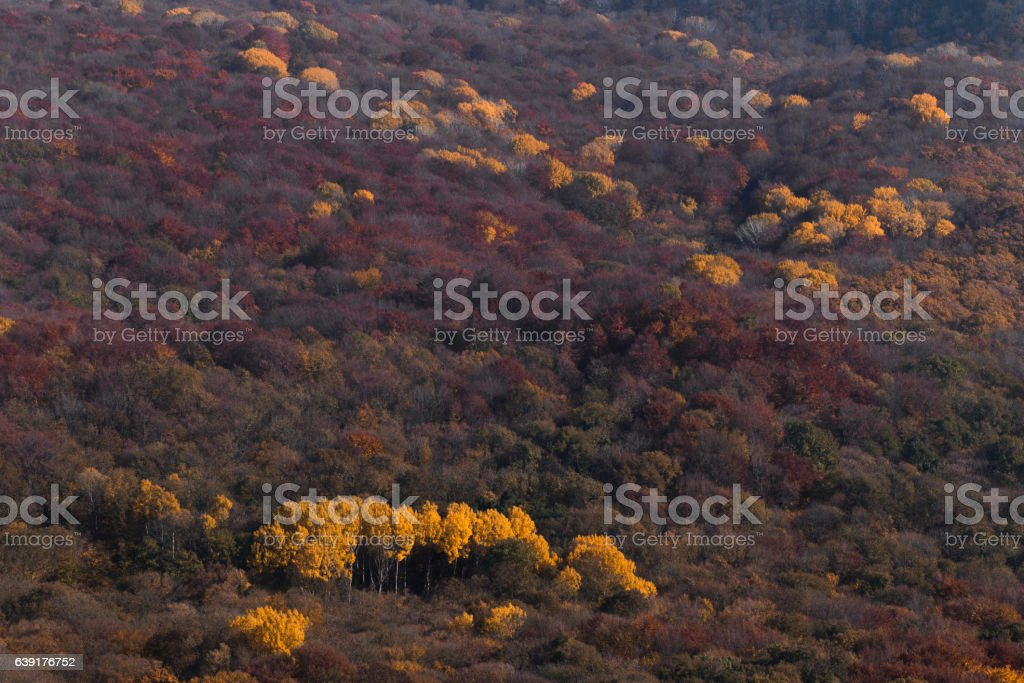 Colorful autumn mountain landscape stock photo