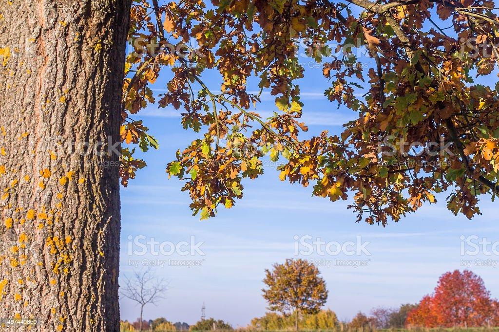 Colorful autumn oak stock photo