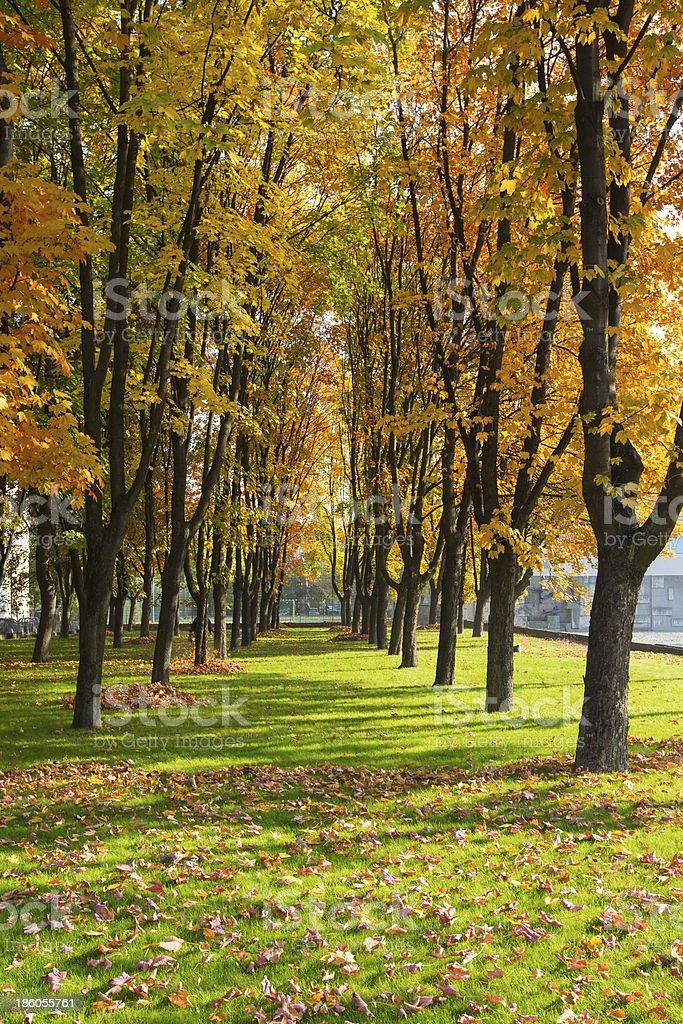 Colorful Autumn Park stock photo