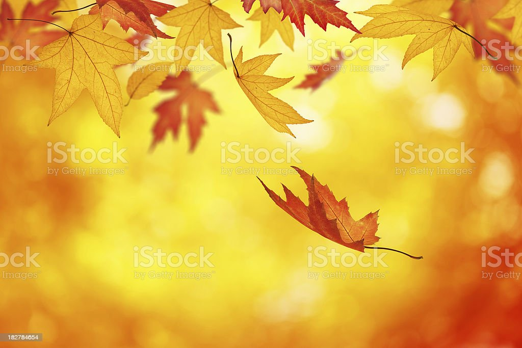 Colorful Autumn royalty-free stock photo