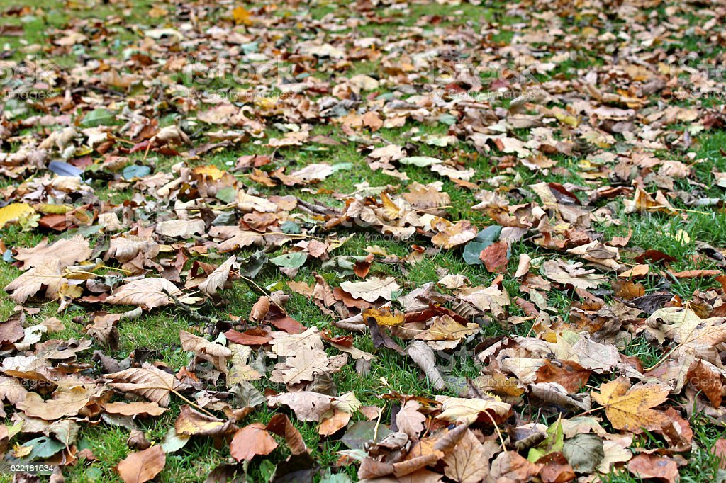 Couleurs de l'automne photo libre de droits