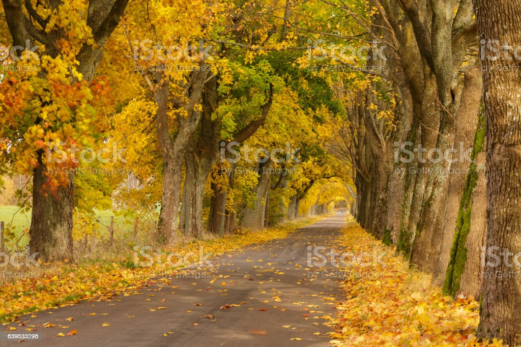 Colorful autumn road nature forest background stock photo