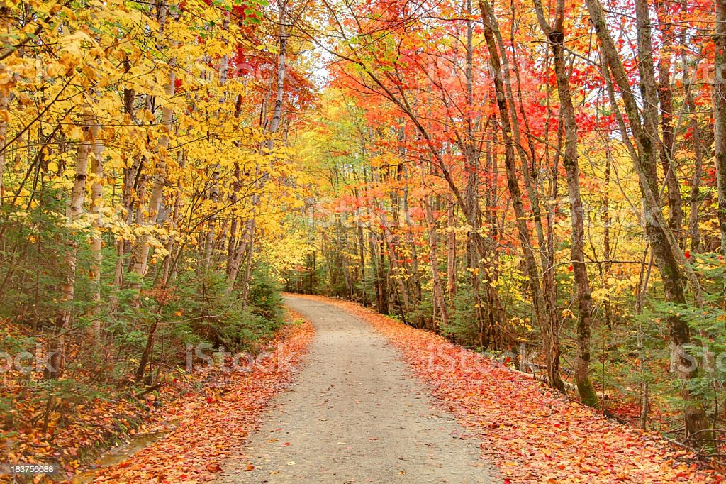 Colorful Autumn Road stock photo