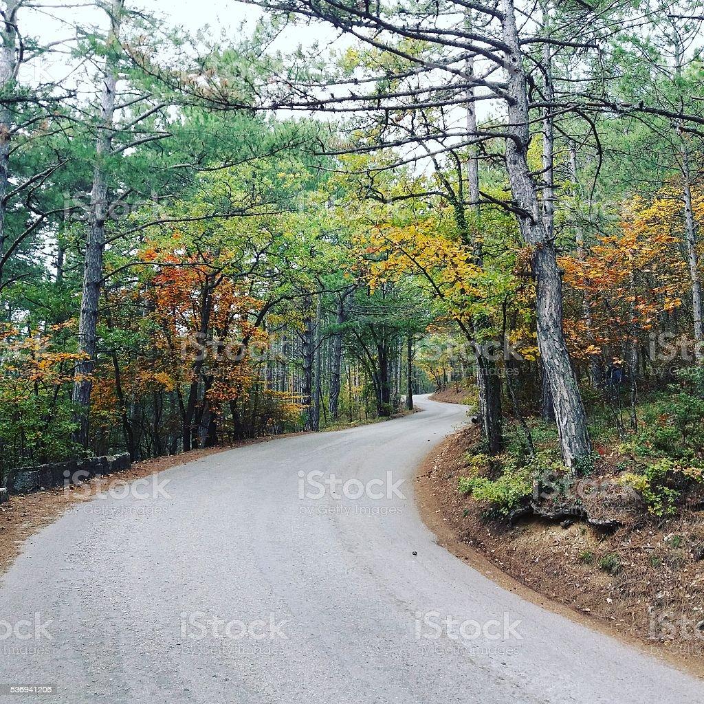 Colorful autumn road stock photo