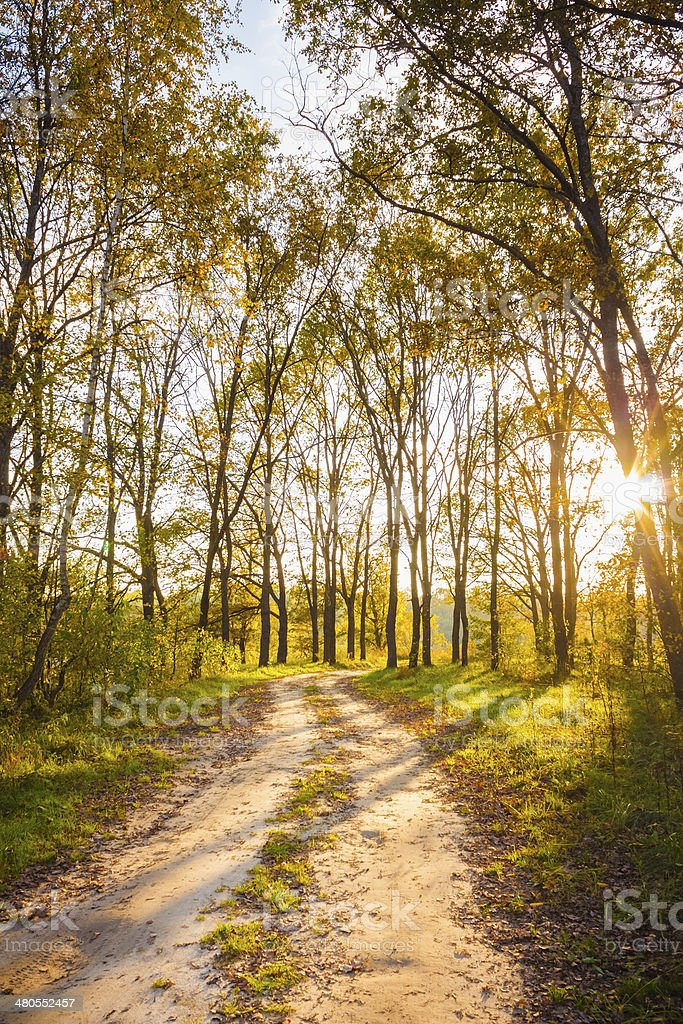 Colorful autumn trees in forest royalty-free stock photo