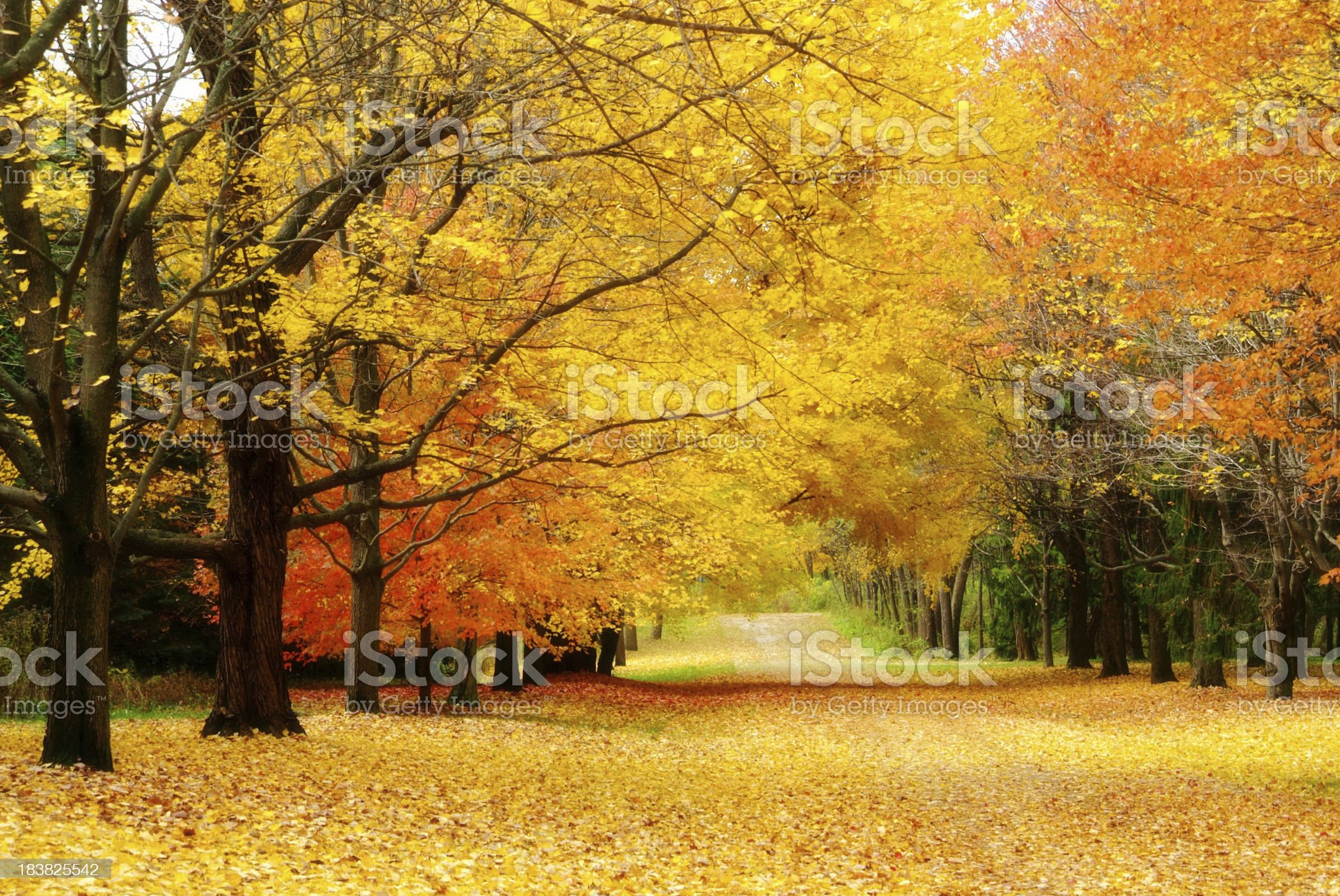 Colorful autumn trees line leaf covered lane royalty-free stock photo