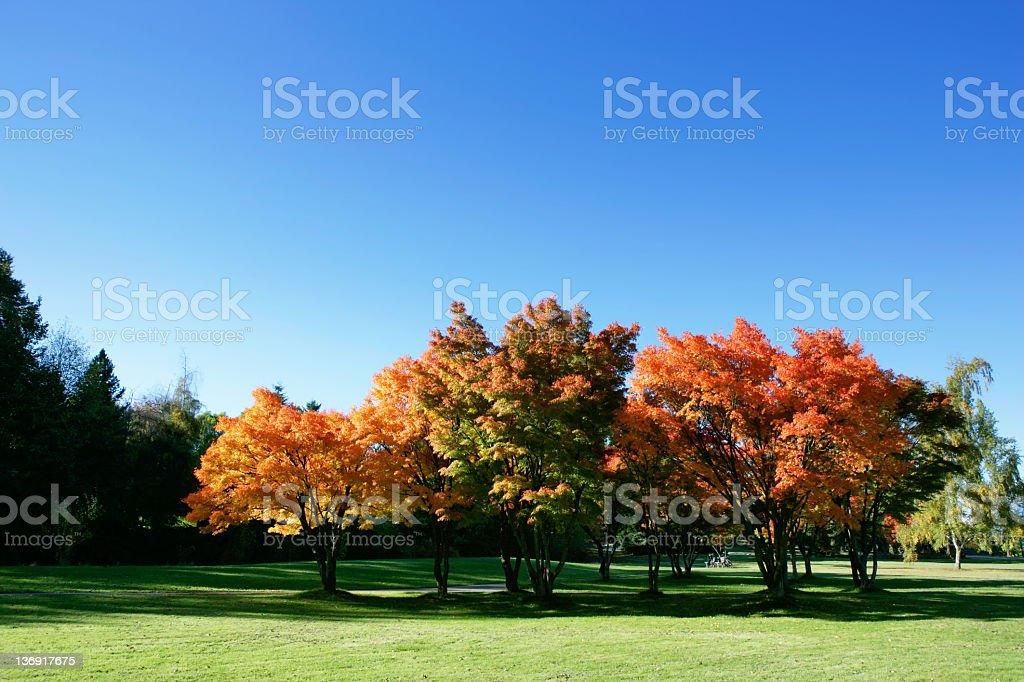 XXL colorful autumn trees royalty-free stock photo