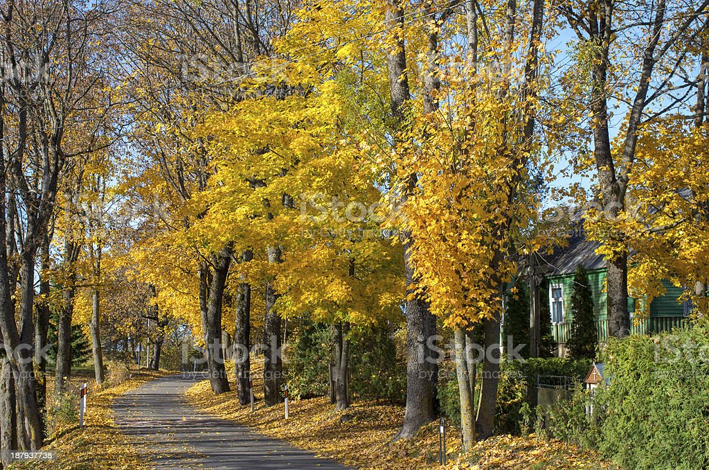Colorful autumn trees royalty-free stock photo