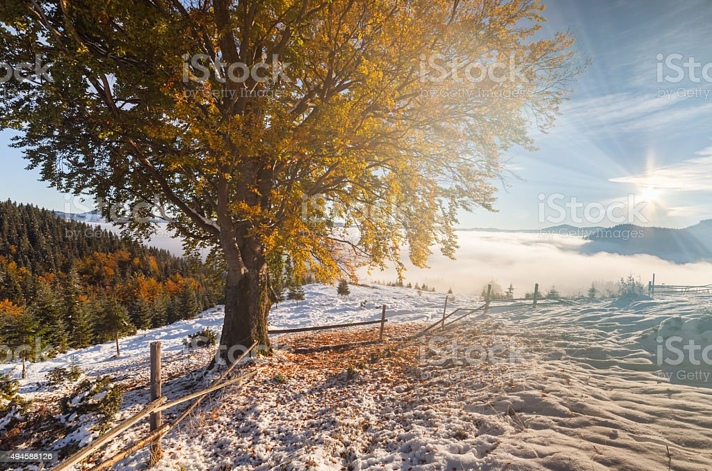 Colorful autumn trees with snow stock photo