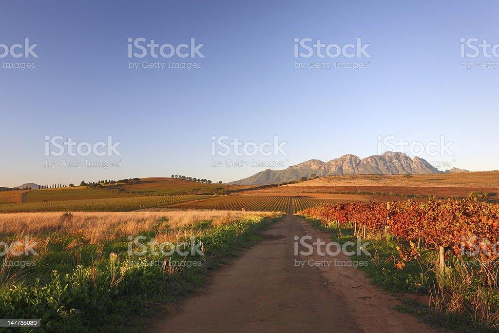 Colorful autumn vineyard stock photo