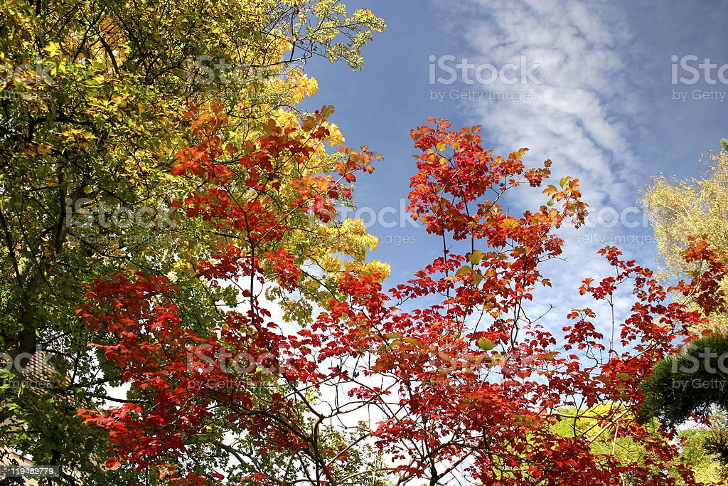 Colorful autumnal trees royalty-free stock photo