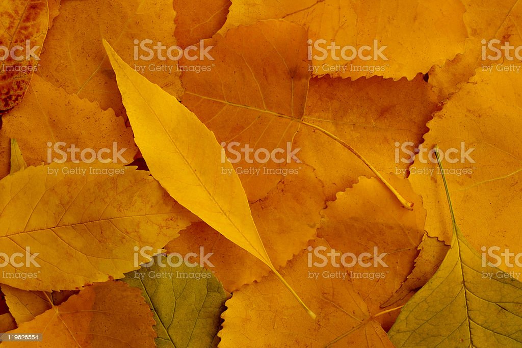 Colorful background of autumn leaves royalty-free stock photo