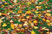 Colorful background with fallen autumn leaves