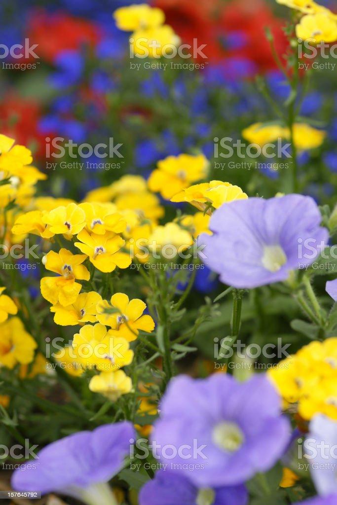 Colorful balcony flowers stock photo