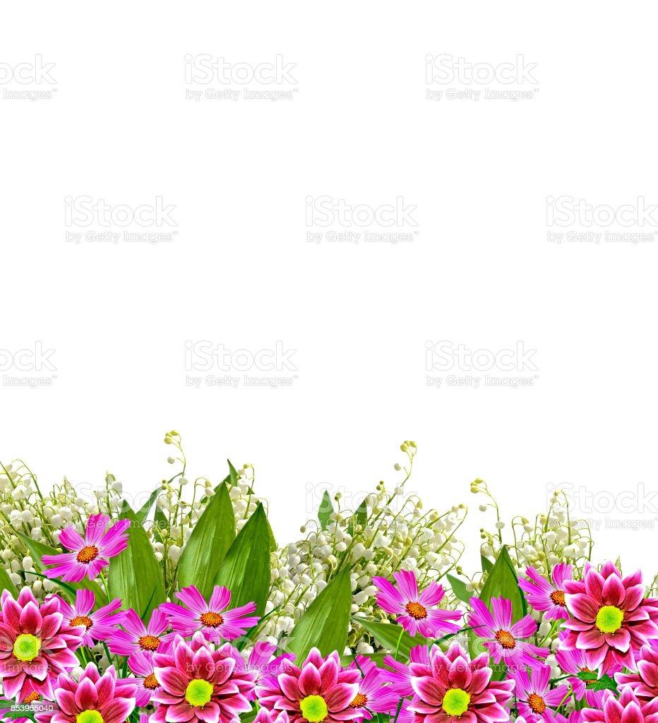 Colorful beautiful autumn flowers stock photo