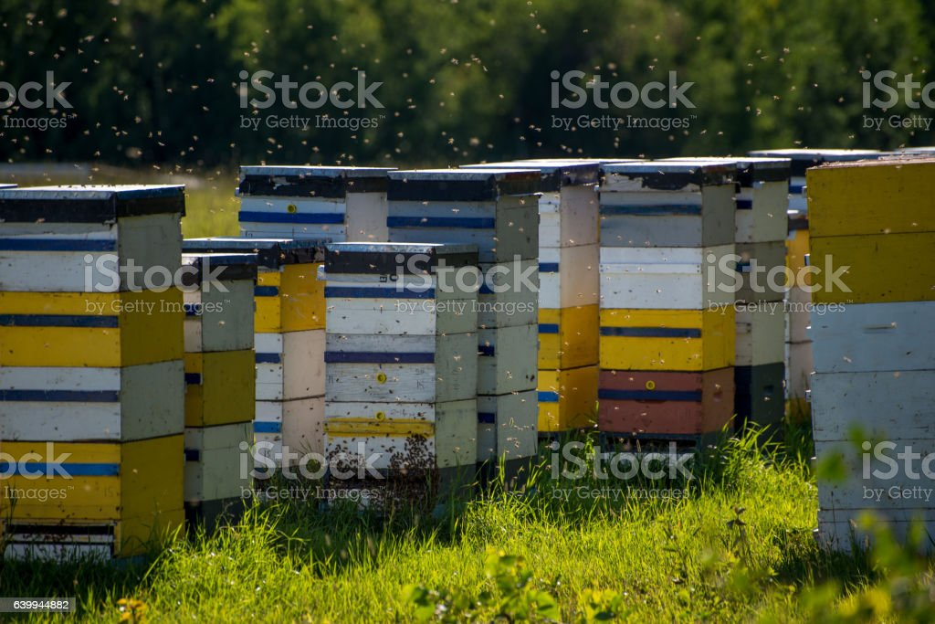 Colorful bee hives on hot summer day stock photo