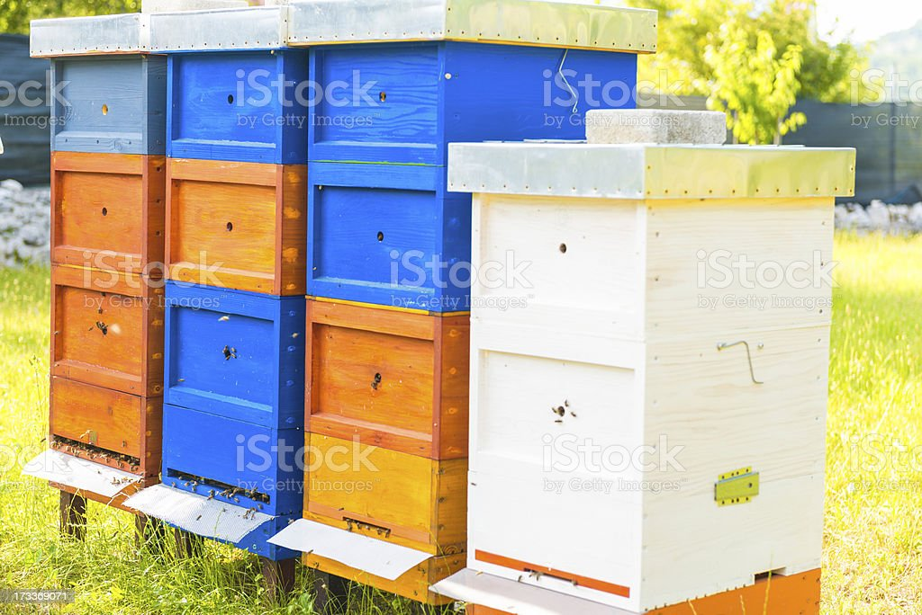 colorful beehive royalty-free stock photo