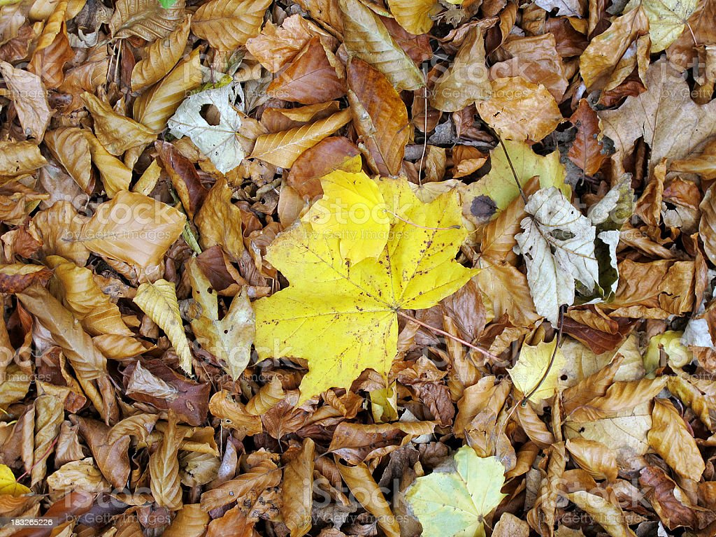 colorful bench and maple leaf in autumn on the ground royalty-free stock photo