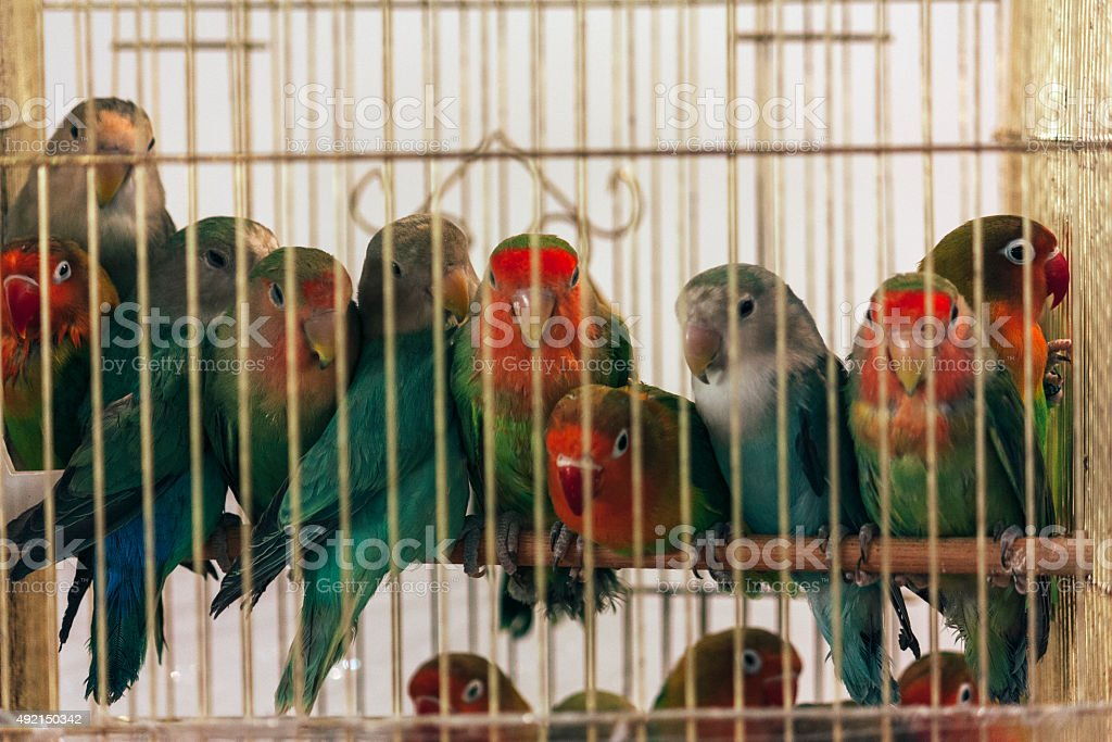 colorful birds, beautiful in nature animal photograph stock photo