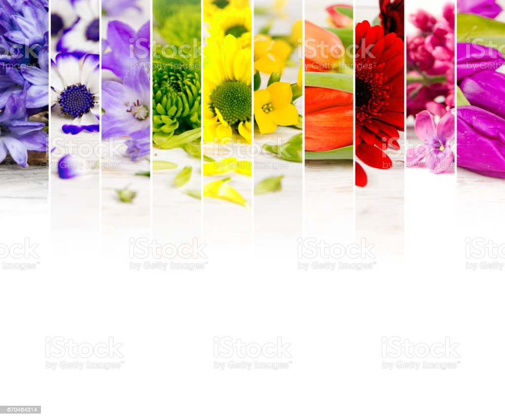 Colorful Bloom Mix stock photo