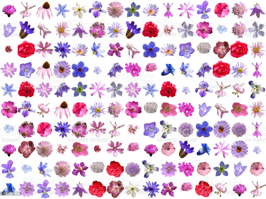 Colorful Blossoms Collage stock photo