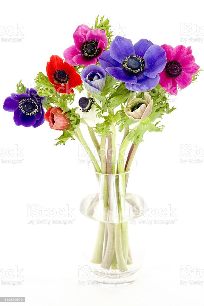 A colorful bouquet of anemones in a glass vase royalty-free stock photo