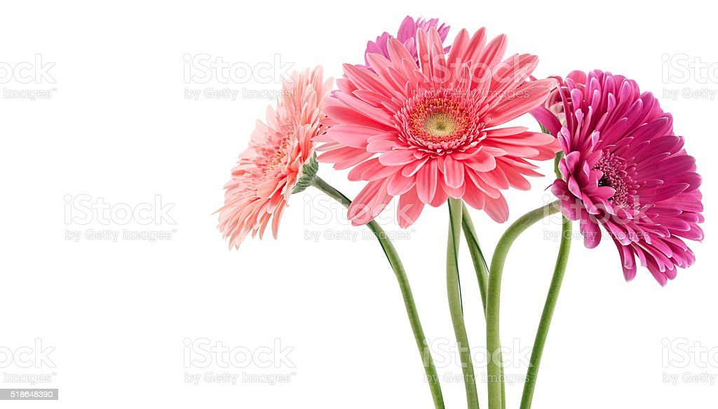 colorful bouquet of gerberas stock photo
